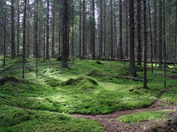 Finlandia - Bosques