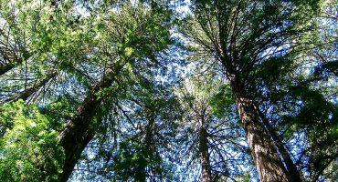 Dormir en las ramas: los hoteles en árboles más curiosos