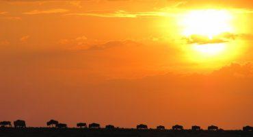 Kenia Mágica lanza la nueva Guía
