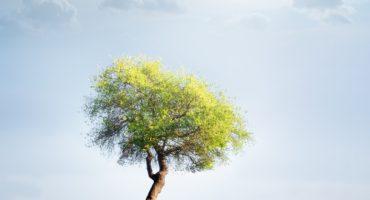 Ecoturismo: un nuevo mundo