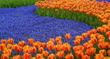 Llega la primavera, una buena excusa para visitar el parque más bonito del mundo