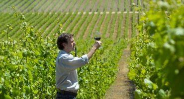 Consejos para recorrer la ruta del vino de Chile -parte 1