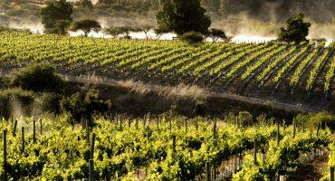Consejos para recorrer la ruta del vino de Chile – parte 2