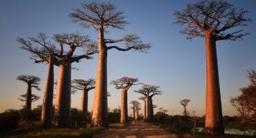 5 maravillas naturales para descubrir antes de que desaparezcan