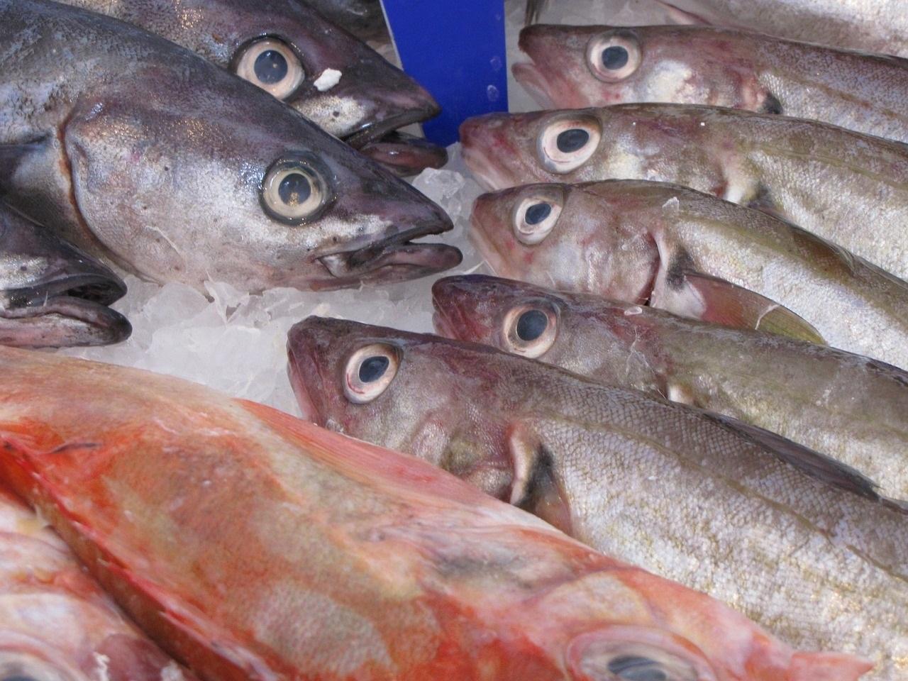 El arenque, pescado favorito de la gastronomía holandesa