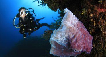 Descubriendo el mundo submarino: Dive Travel Show, segunda inmersión