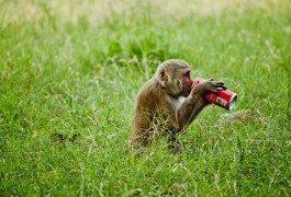 ¿Cocacolonización? No siempre tiene que ser Coca Cola…