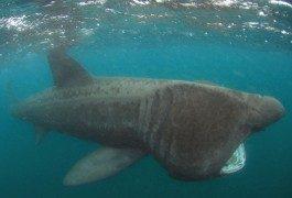 Fotografiar tiburones… y nadar con ellos