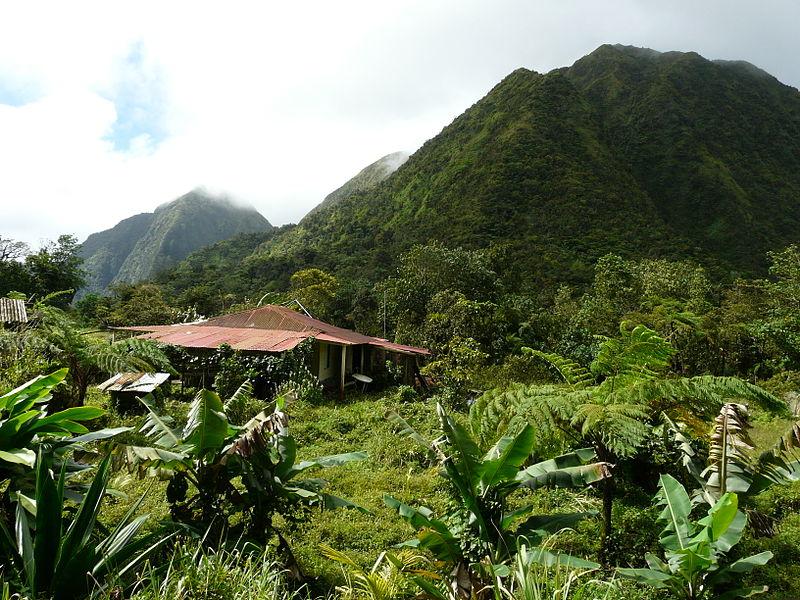 Selva de Martinica