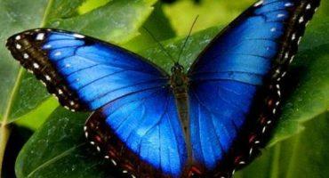 Costa Rica: pura vida