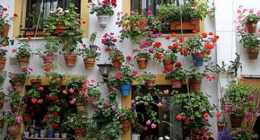 El esplendor de mayo de los patios cordobeses