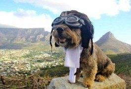 Oscar: la vida de perros de un trotamundos a cuatro patas