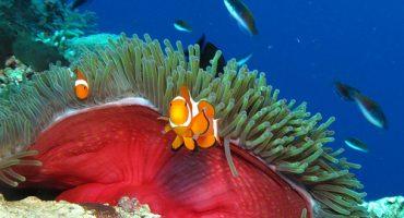 """""""Hacia un mar sin plásticos"""": conciencia y sostenibilidad en el Dive Travel Show 2013, primera inmersión"""