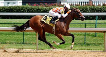 Los mejores jinetes corren en las carreras de caballos de Dubái