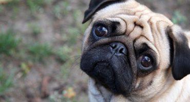 Berlín aplica una tasa turística… ¡a los perros!