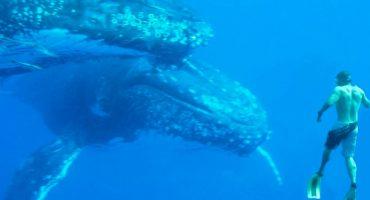 Top 5: Lugares donde nadar con los gigantes del mar
