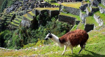 Se regula la visita al Machu Picchu