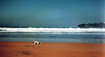 Playas para perros en España, ¿dónde ir con tu mascota?
