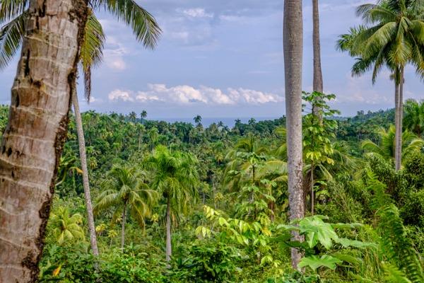 Parque Natural Alejandro de Humboldt (Cuba)