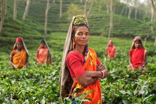 India-plantas-campo-te