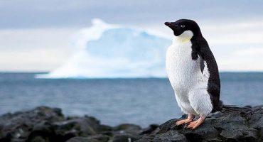 ¿Quieres ser cartero en la Antartida?