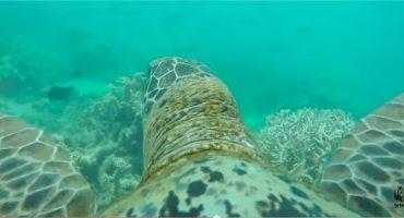 VÍDEO – La Gran Barrera de Coral a vista de tortuga