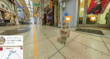 A vista de gato con el «Cat Street View»