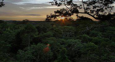 5 selvas para recorrer en Sudamérica