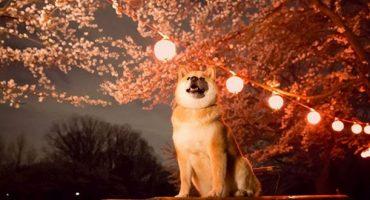 Maru, nuevo embajador turístico en Japón