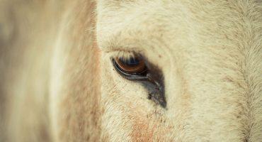9 atracciones turísticas que maltratan animales