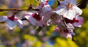 7 ciudades que has de visitar en primavera