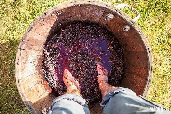 Proceso de fabricación del vino