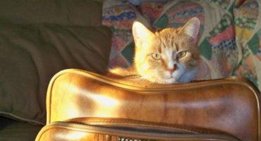 Volar con mascotas: información práctica