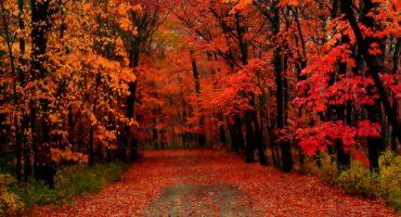 10 viajes coloridos para el otoño