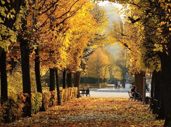 Avenida arbolada en Schonbrunn