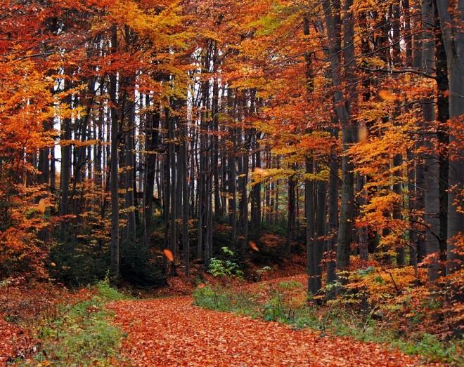 Bosque de Wienerwald