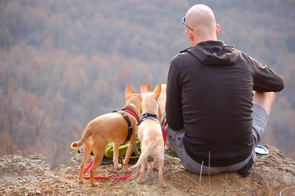 Monte-con-perros