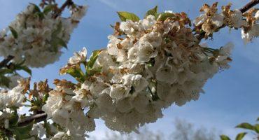 5 lugares para pasar una Primavera Rural