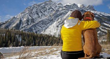 5 aspectos a tener en cuenta si viajas con tu mascota