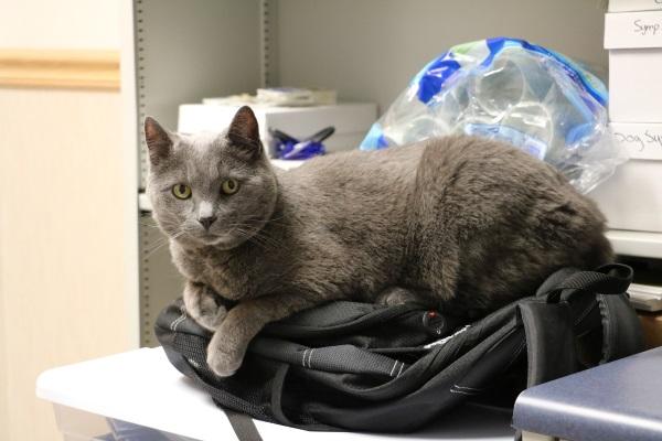 gato-mochila-oficina