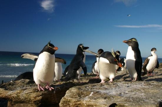pingüinos-malvinas