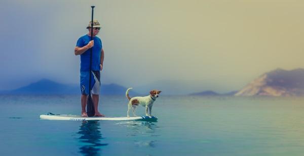 perro-hombre-tabla-surf