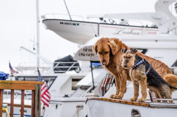 perros-observando-barco