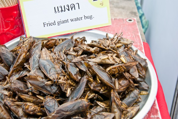 insectos-comida