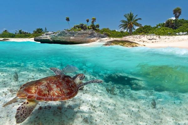 caribe-tortuga-mexico