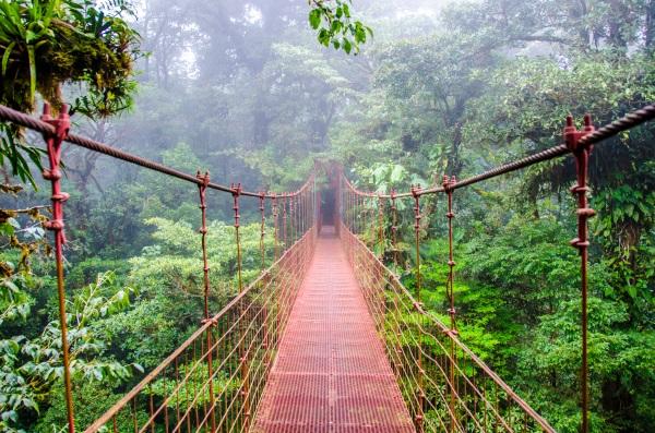 puente-monteverde-bosque-costa-rica