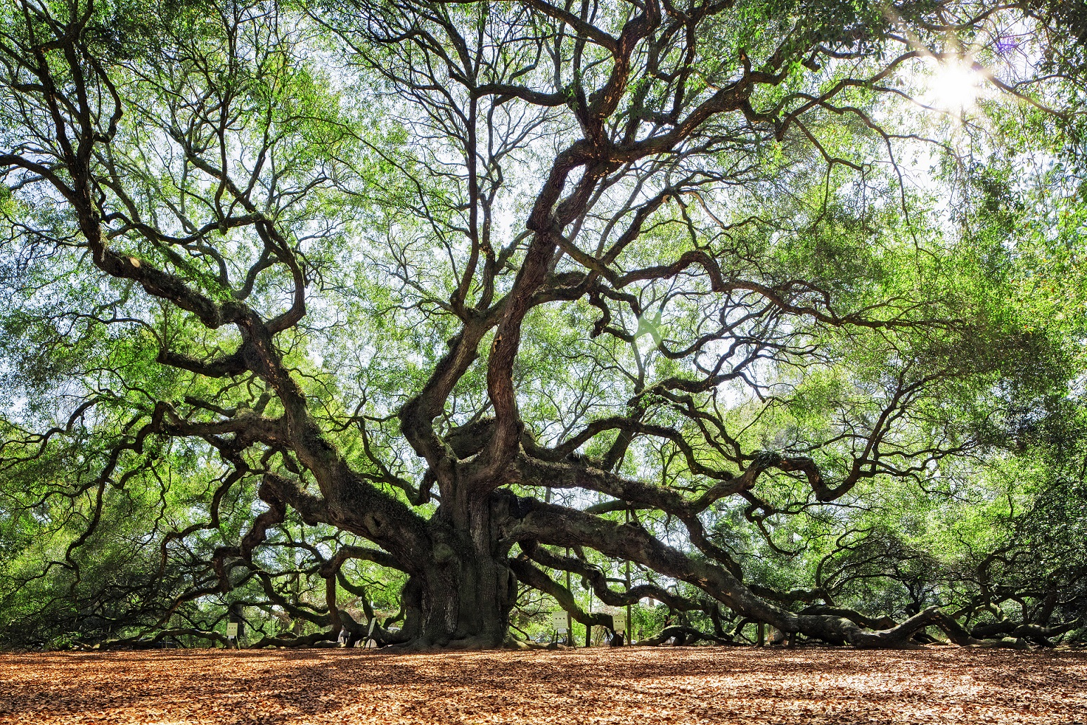 Angel Oak, en Estados Unidos