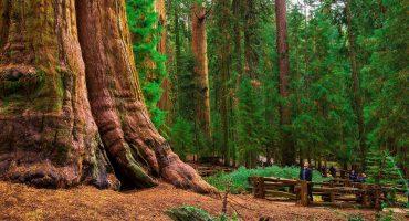 5 lugares donde han crecido árboles sorprendentes