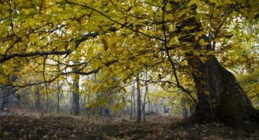 6 lugares para disfrutar de la Naturaleza cerca de Madrid
