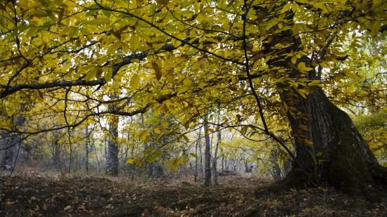 Bosque de la Herrería, en Madrid